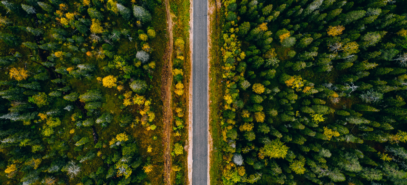 aerial-view-of-rural-road-and-colorful-autumn-fore-6L7RDK2.png